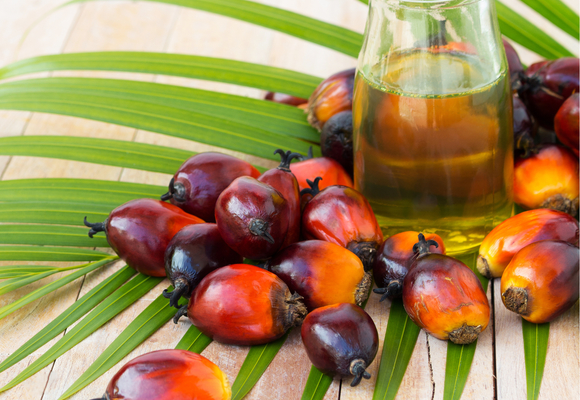 Palm Oil Supply Chain Review